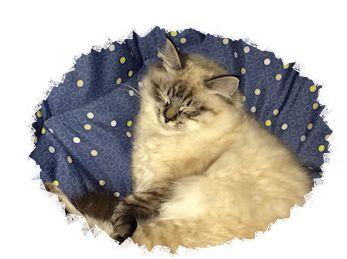 catnessx_framed