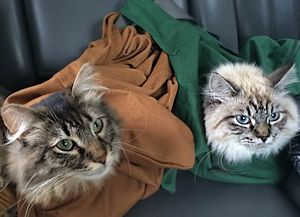 cat_bag1_300x217