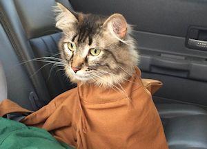 cat_bag2_300x217