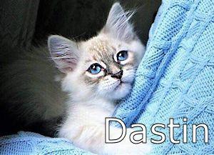 000XX_Dastin