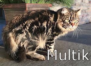 000x_Multik