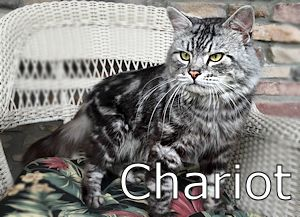 1A_Chariot