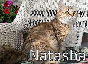 1A_Natasha