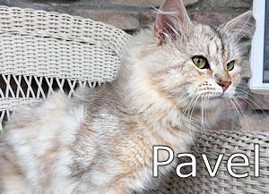 1A_Pavel
