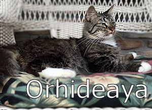 1_A_Orhideaya
