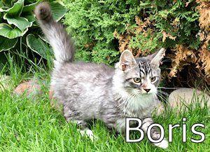 5551_Borisa
