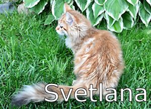 5551_Svetlana