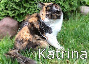 55_Katrina
