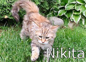 55_NiktaB