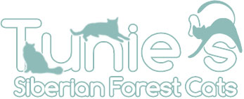 Tunie's Siberian Forest Cats